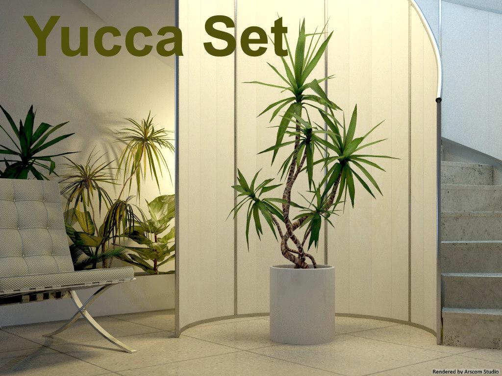 maya yucca set