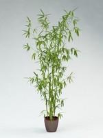 bamboo Bambusoideae