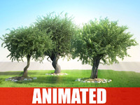 tree animation olea studio 3d obj
