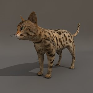 3d dapple cat model