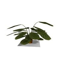 3ds max interior plant
