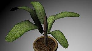 tropical plant obj free