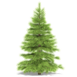 spruce max