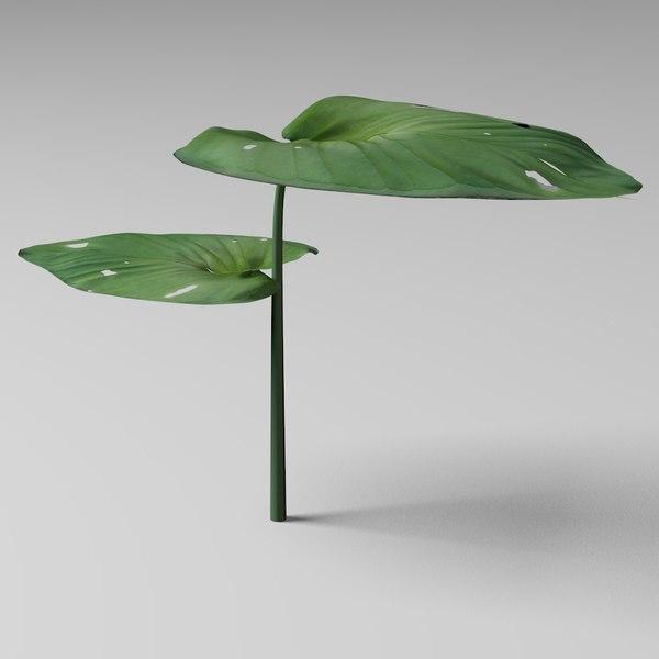 3d model of leaf