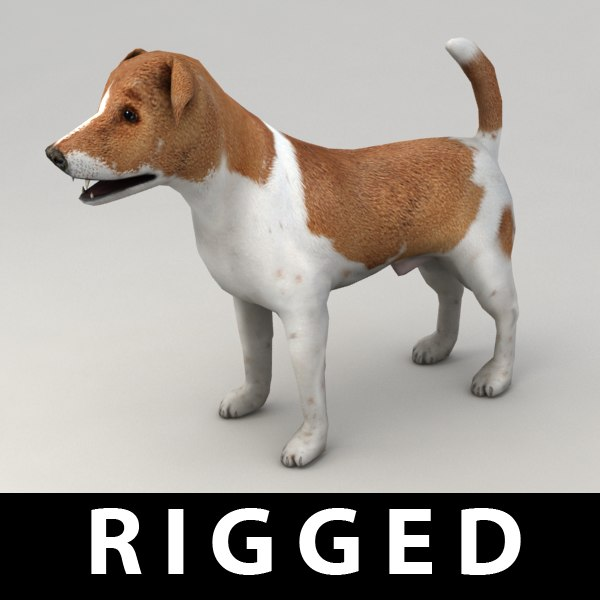 3d jack russell terrier