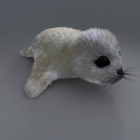 3d obj baby seal
