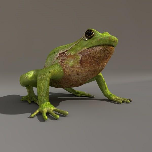 3d model green tree-frog