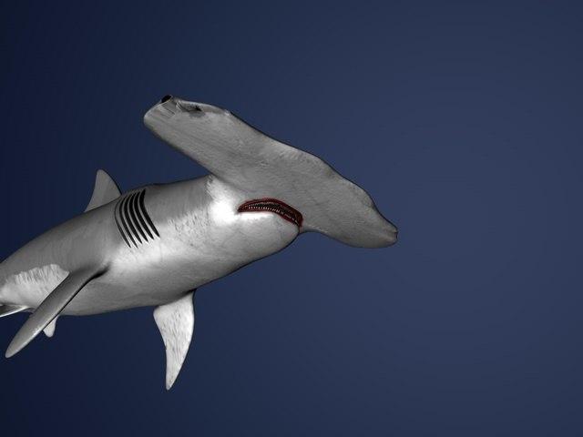 shark hammer c4d