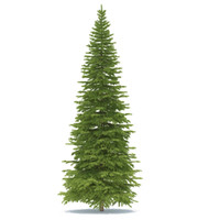 spruce max