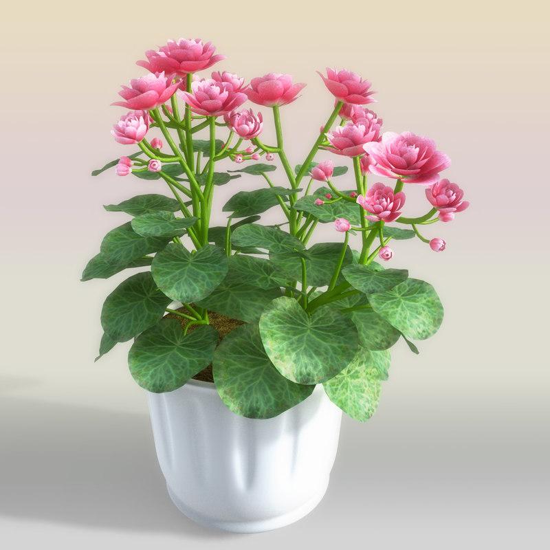 begonia flowerpot 3d model