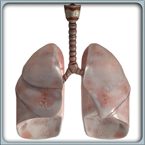 3d model of lungs