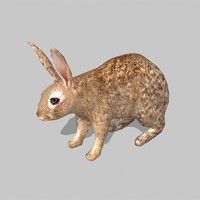 3d model rabbit uv