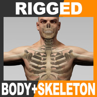 Rigged Human Male Body and Skeleton