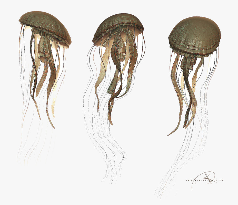 jellyfish jelly 3d model