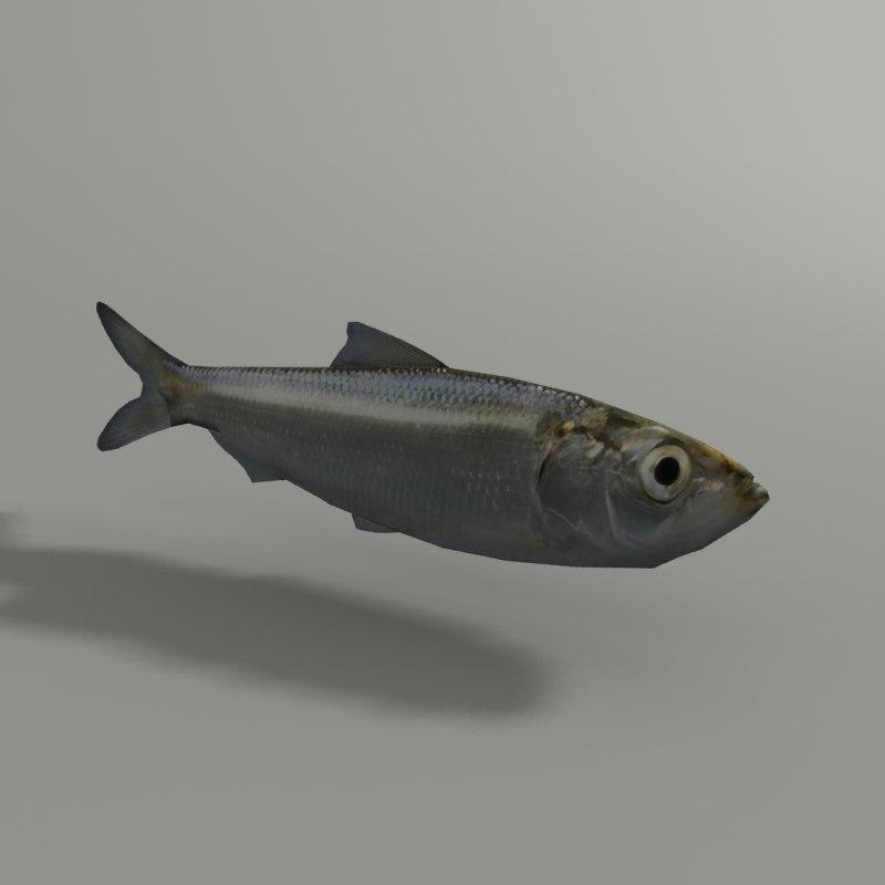 3d max herring blender