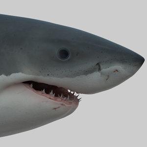 3d obj great white shark