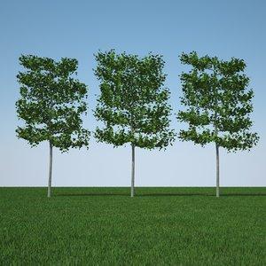 3d model common lime tree pack