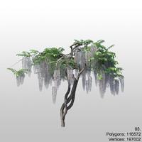 wisteria 03