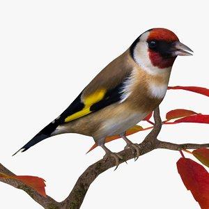 goldfinch ab 3d 3ds