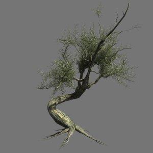 3ds olive tree