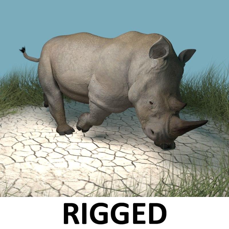 3d white rhinoceros rhinos
