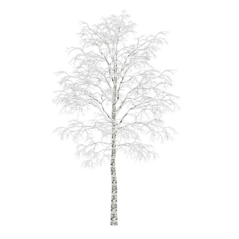 tree birch winter max