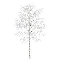 Birch-Tree 4.5m (Winter)