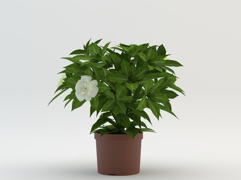 max flower