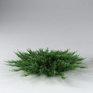 3d model savin juniper juniperus sabina
