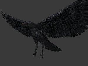 3d crow model