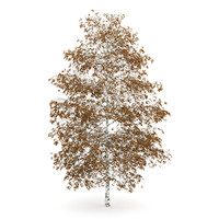 c4d tree birch