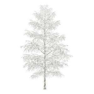 tree birch winter