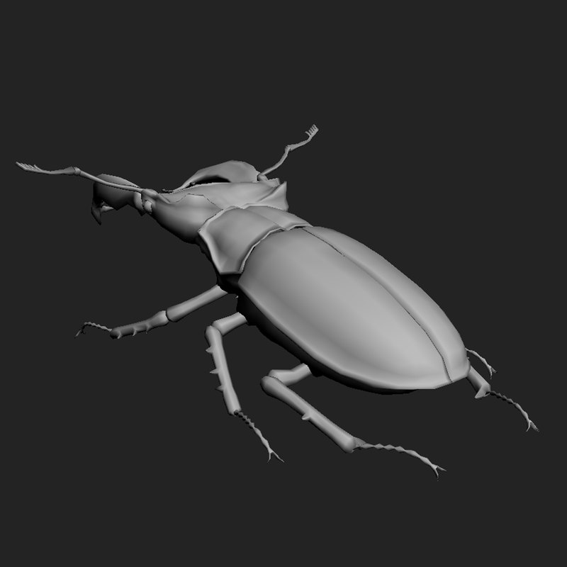 beetle low-poly max