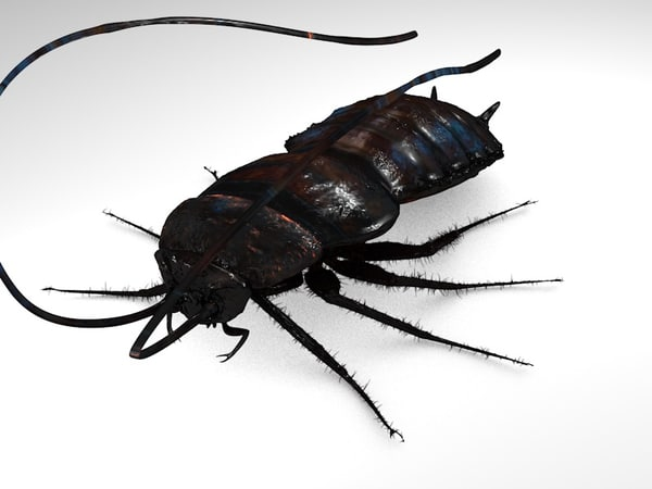 c4d cockroach mudbox displacement