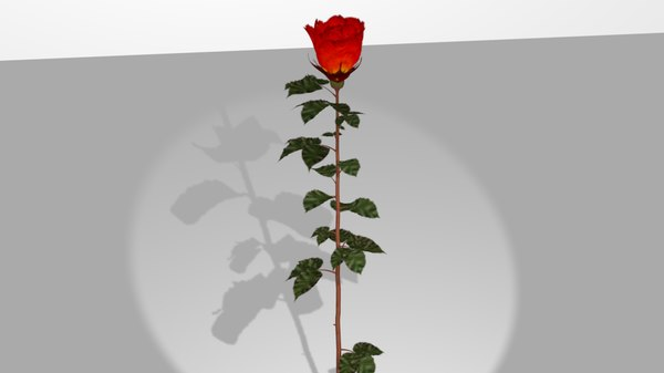 red rose 3ds