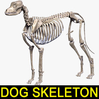 Canine Skeleton Textured