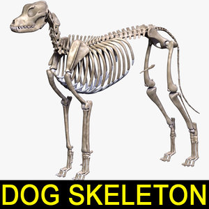 dog skeleton 3d 3ds