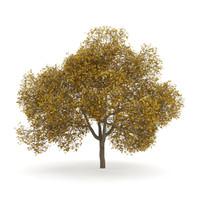 english oak autumn