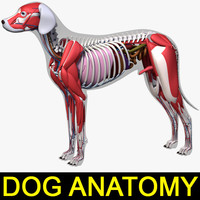 dog anatomy dalmatian 3ds