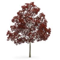 3ds max autumn acer platanoides
