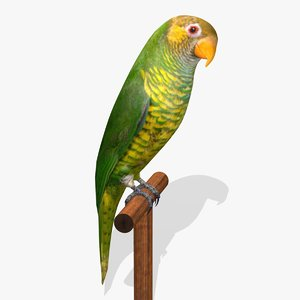 3d parrot birds ab