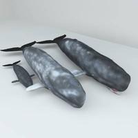 3d ged sperm whales set