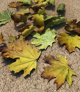 3d model leafs