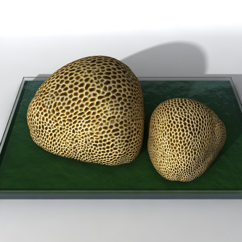 3ds max coral rock