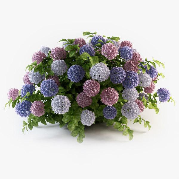 hydrangea flowers 3d 3ds