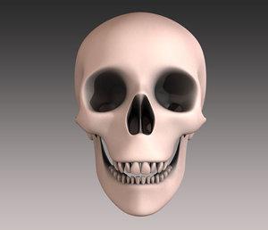 3d model human head skull