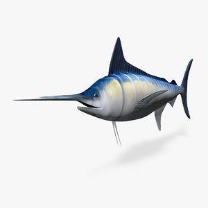 blue marlin 3d c4d