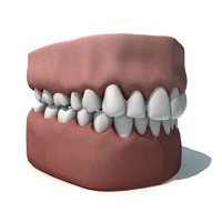 3d model teeths gums