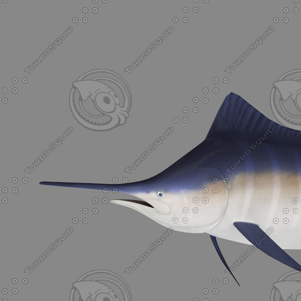 3d model blue marlin