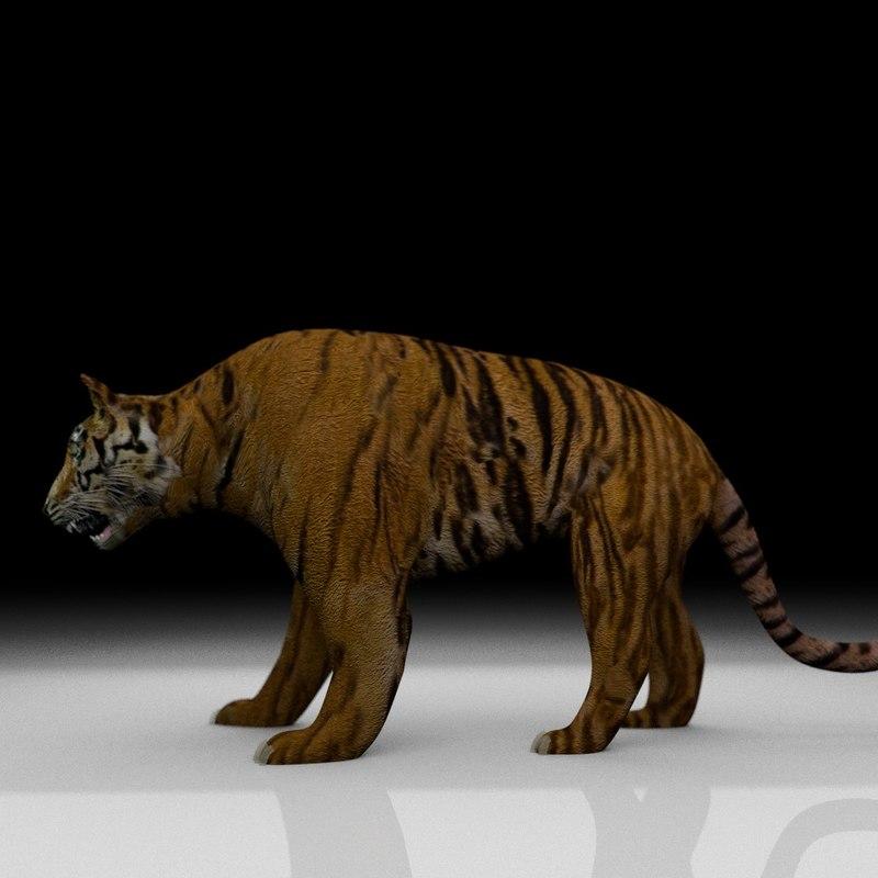 tiger x